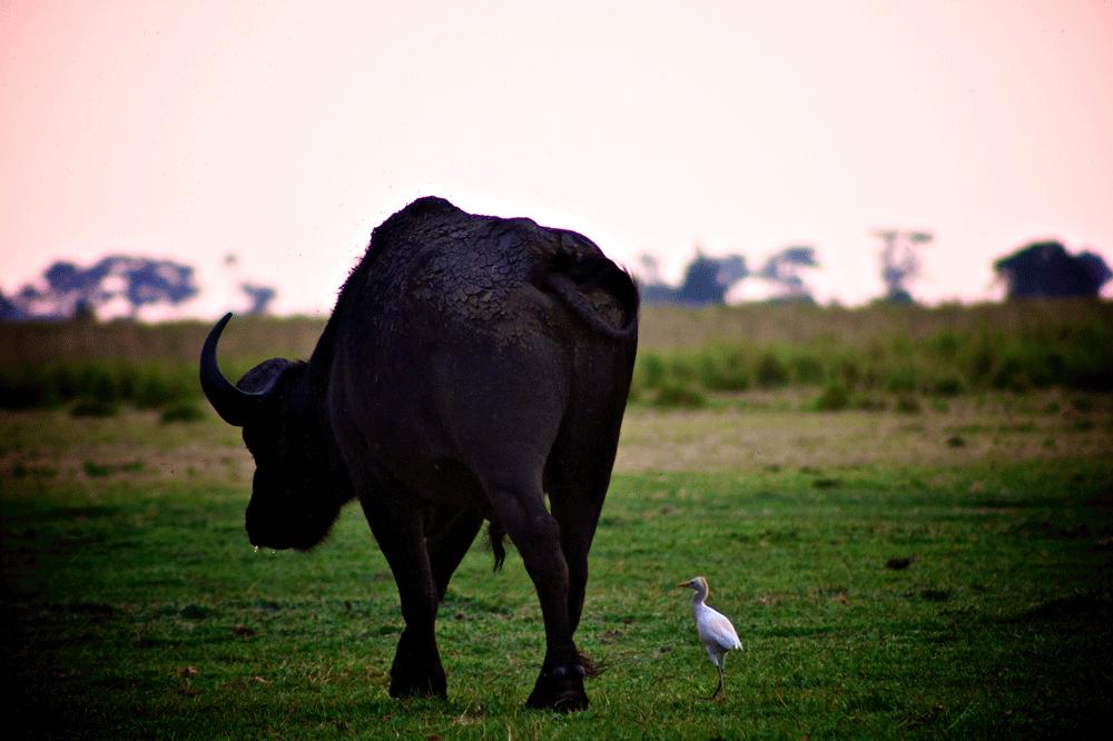 20101026_40D_Caprivi-Botswana_1406-37