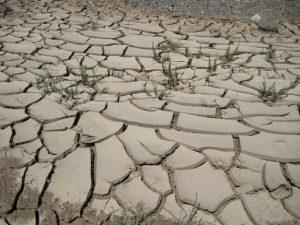 Trockenheit in der Westmongolei