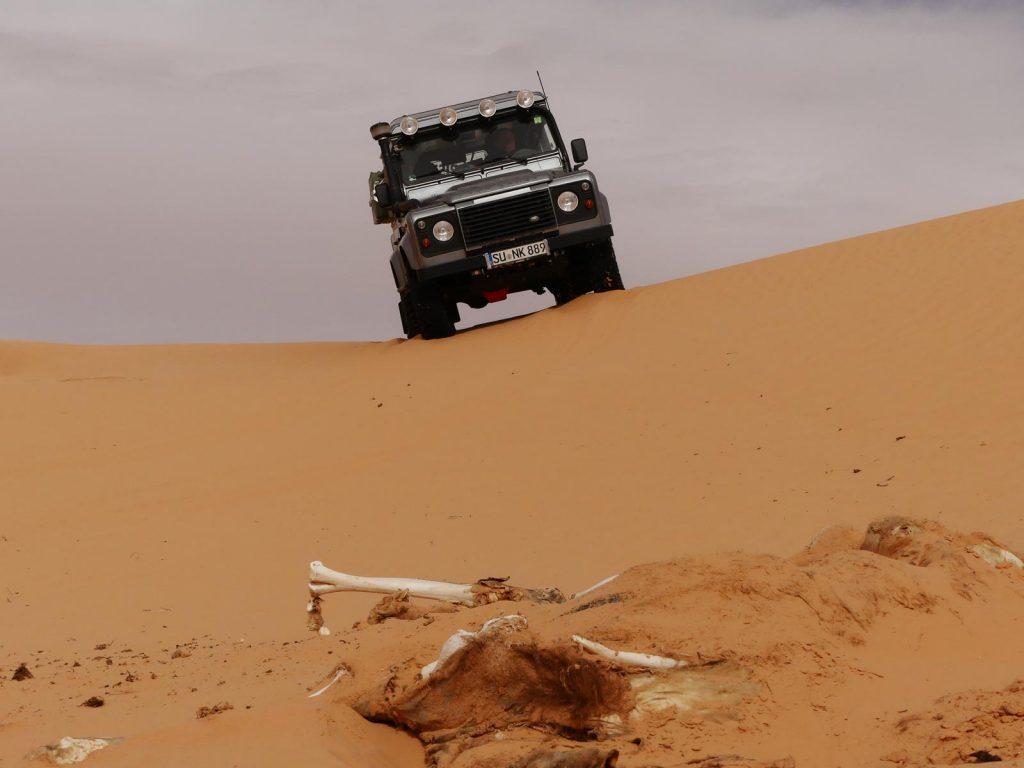 Das liegt wohl schon länger da, Tunesien Sahara Extrem