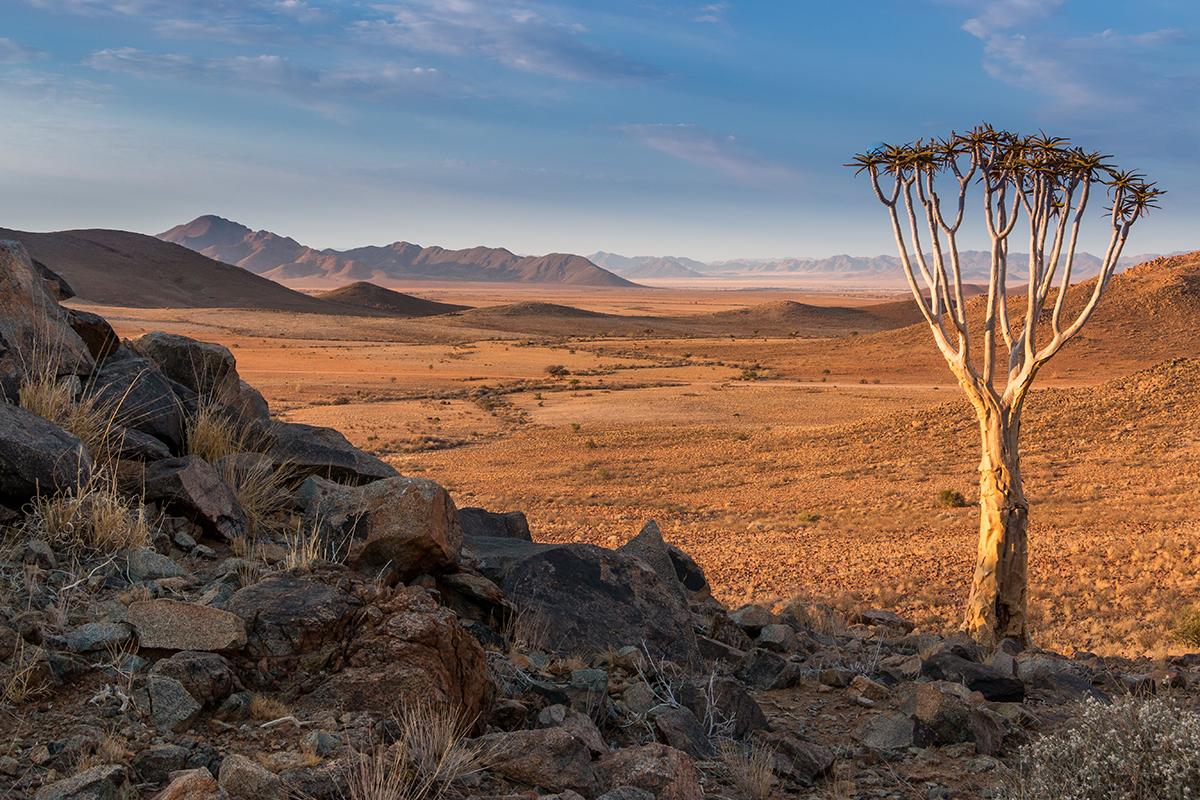 Köcherbaum in den Tirasbergen, Foto: Constanze Kühnel, Mantoco