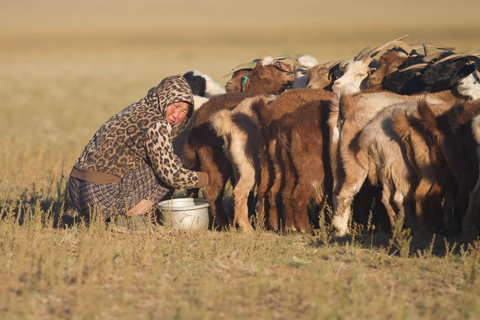Am Rande der Wüste Gobi, Mongolei