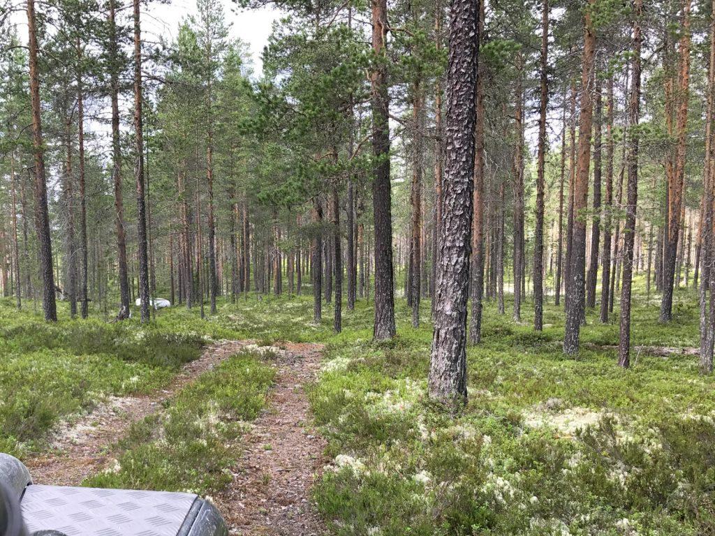 Offroad fahren in Schweden ist auf solchen Wegen erlaubt.