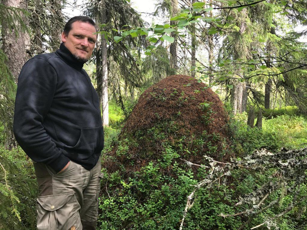 1,5 Meter hoher Ameisenhügel in Schweden
