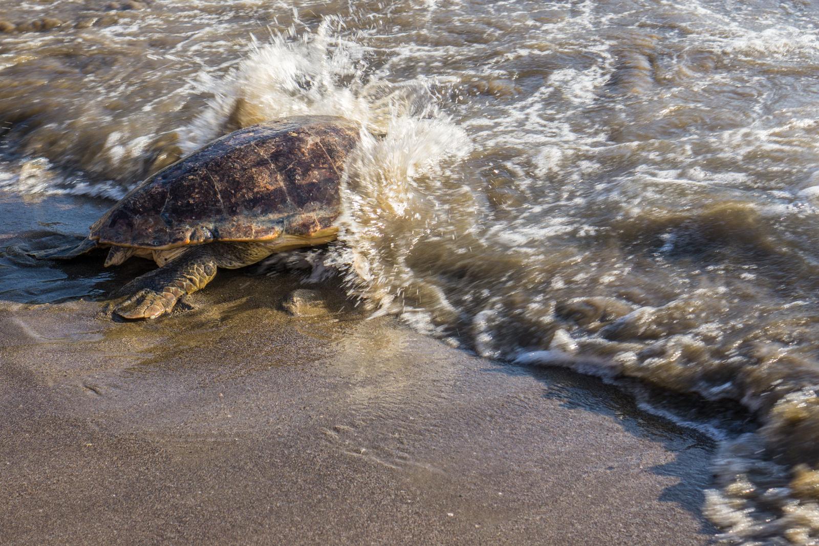 Bodensee-Overlander - Meeresschildkröten in der Türkei.