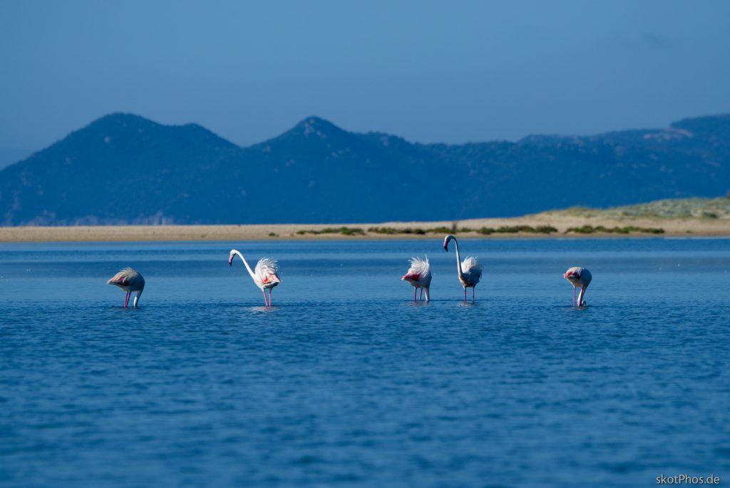 Sardinien - Guten Morgen Flamingos.
