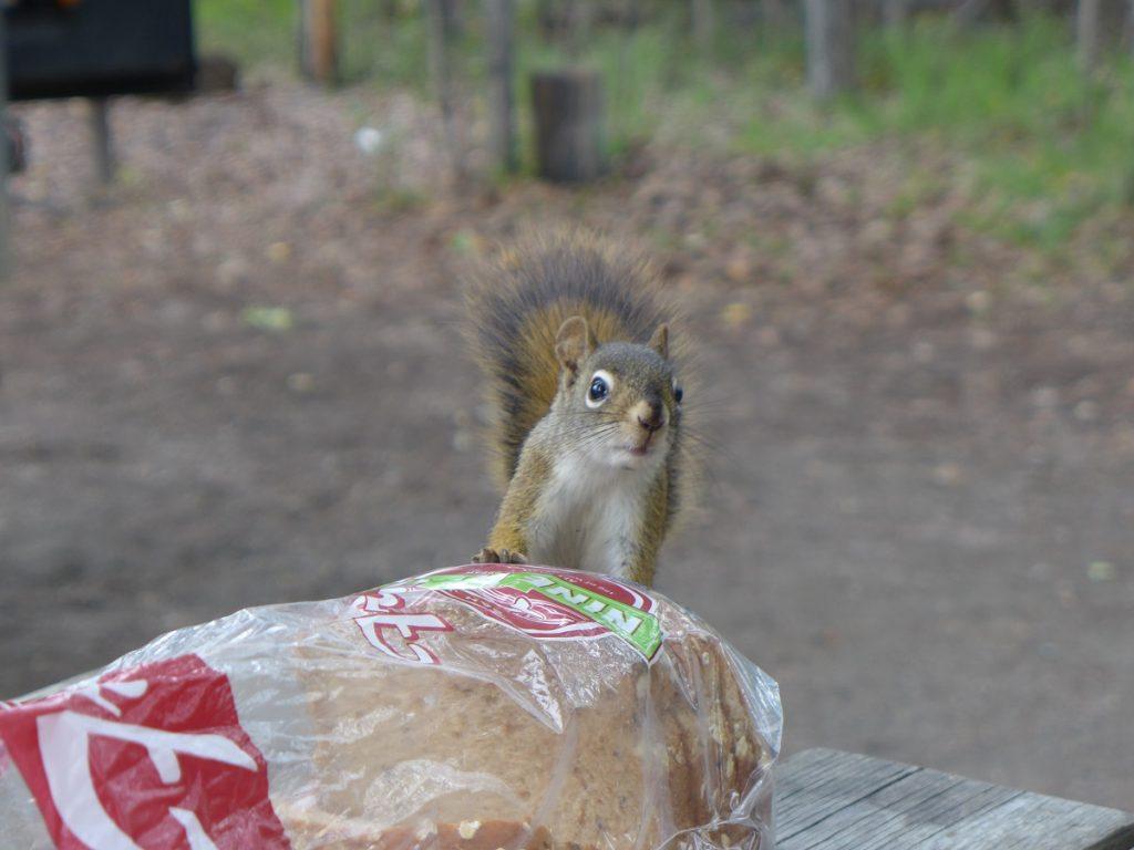 Ein putziger Gast zum Frühstück.