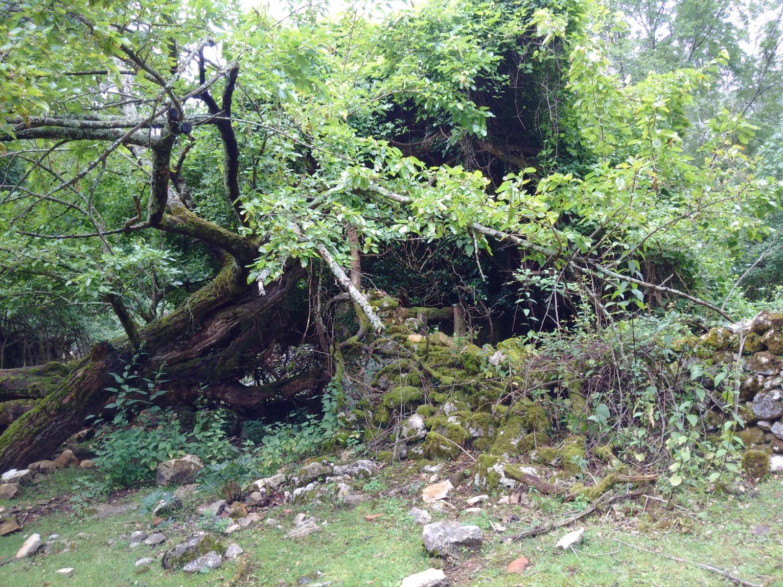 Ruinen am Wegesrand