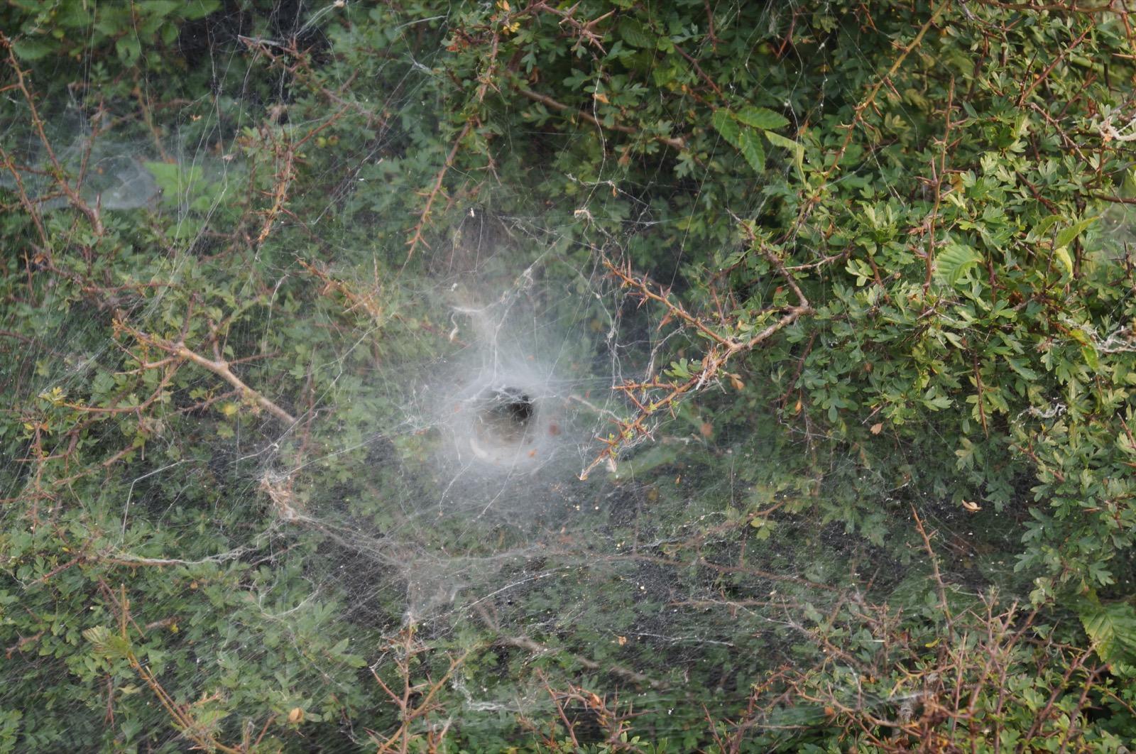 Spinnennetze, Kroatien Offroad