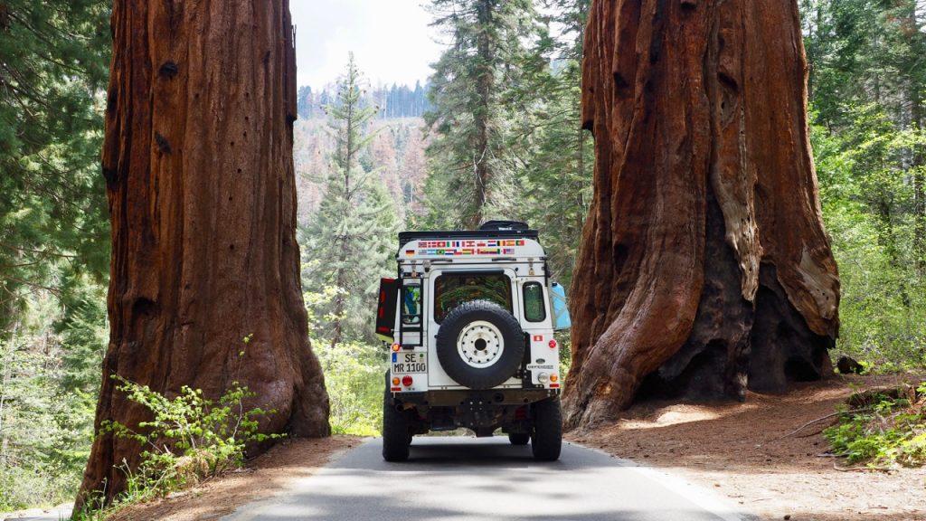 Reisen in Nordamerika - Sequoia NP.
