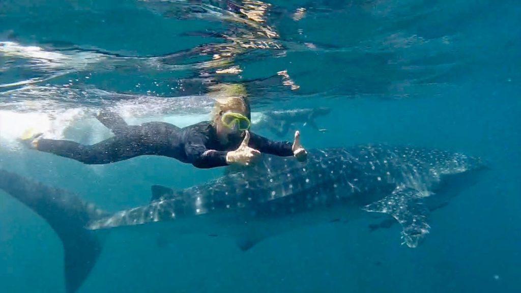 Reisen in Nordamerika - Schnorcheln mit Walhaien.