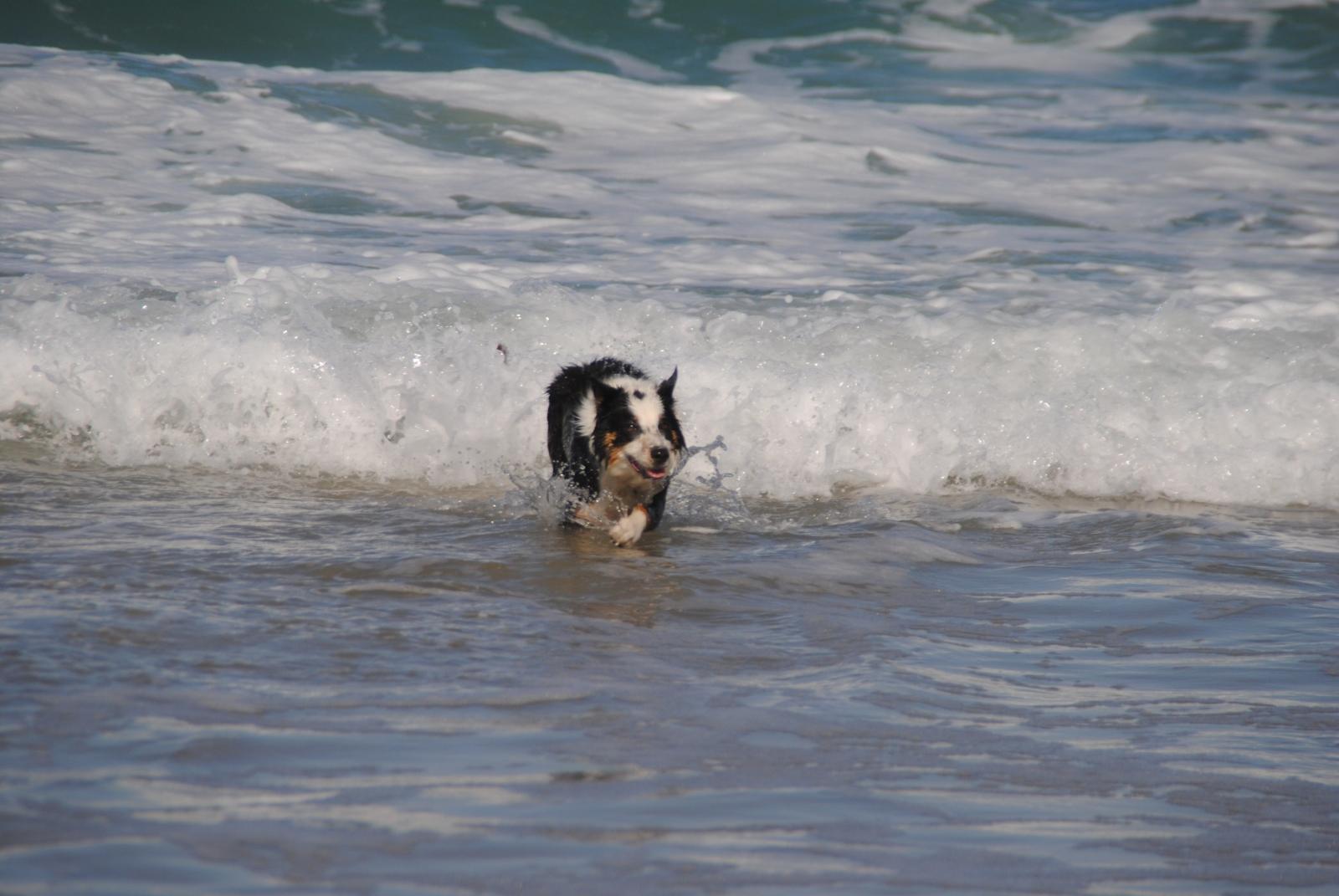 Es macht Spaß und ist entspannend mit Hunden im Wasser zu spielen! Das ändert sich jedoch wenn der nasse, sandige Hund im Auto ist.