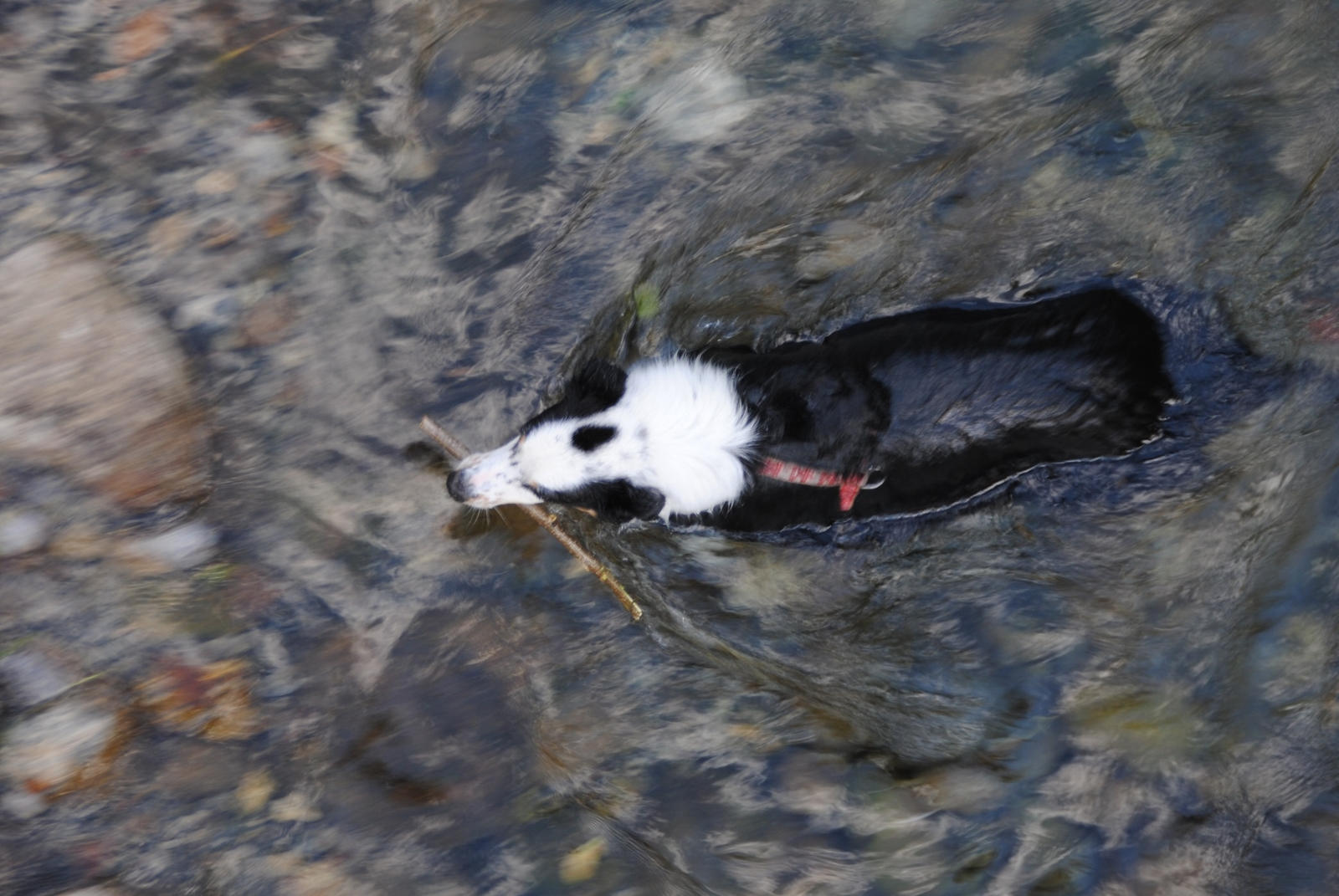 Falls ihr denkt man könnte mit einem Shepherd einfach so am Wasser laufen, vergesst es.