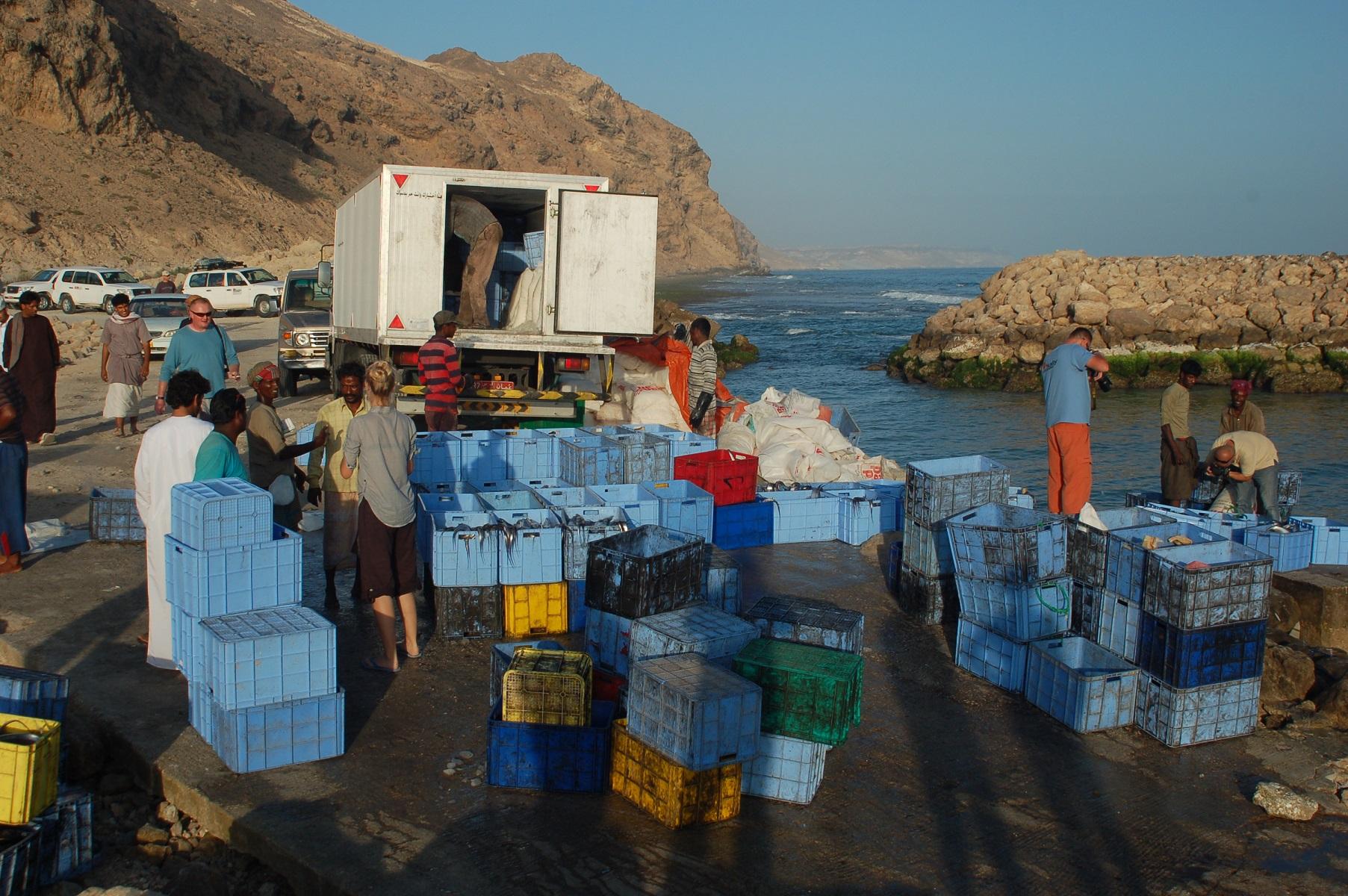 Oman - Jurek kennt sich aus, dieser Küstenabschnitt ist ein Geheimtipp wo viele Einheimische direkt fangfrisch kaufen.