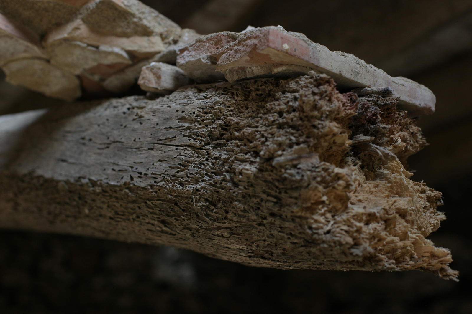 Altes Holz mit Bodenfliesen.