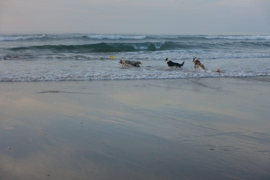 Ein letztes Bad im Atlantik. Mit den Hunden gab es keine Probleme, diese schöne Auszeit haben sie sich verdient.