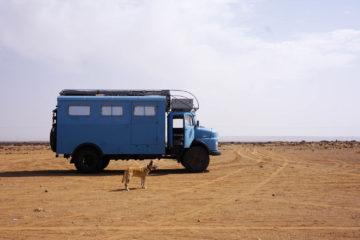 Der Reisehund Sidi mit dem Reisewagen Frau Scherer.