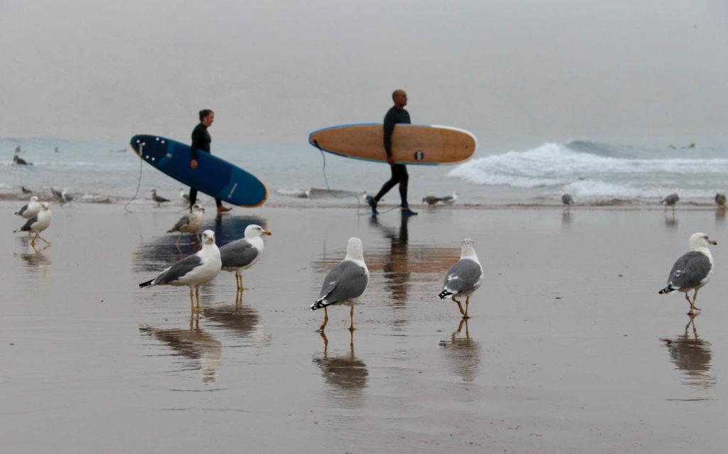 Mit Frau Scherer durch die Westsahara - Surfer stürzen sich wie die Lemminge in die Fluten.