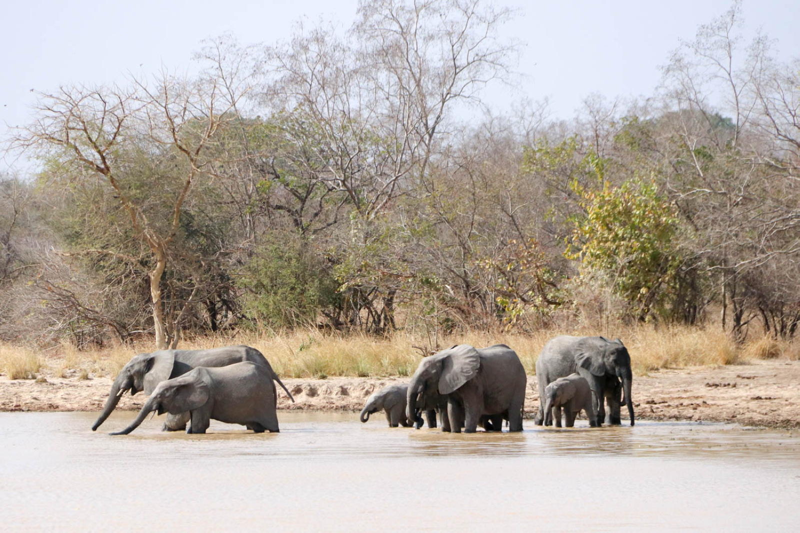 Elefanten beim kühlen Bad.