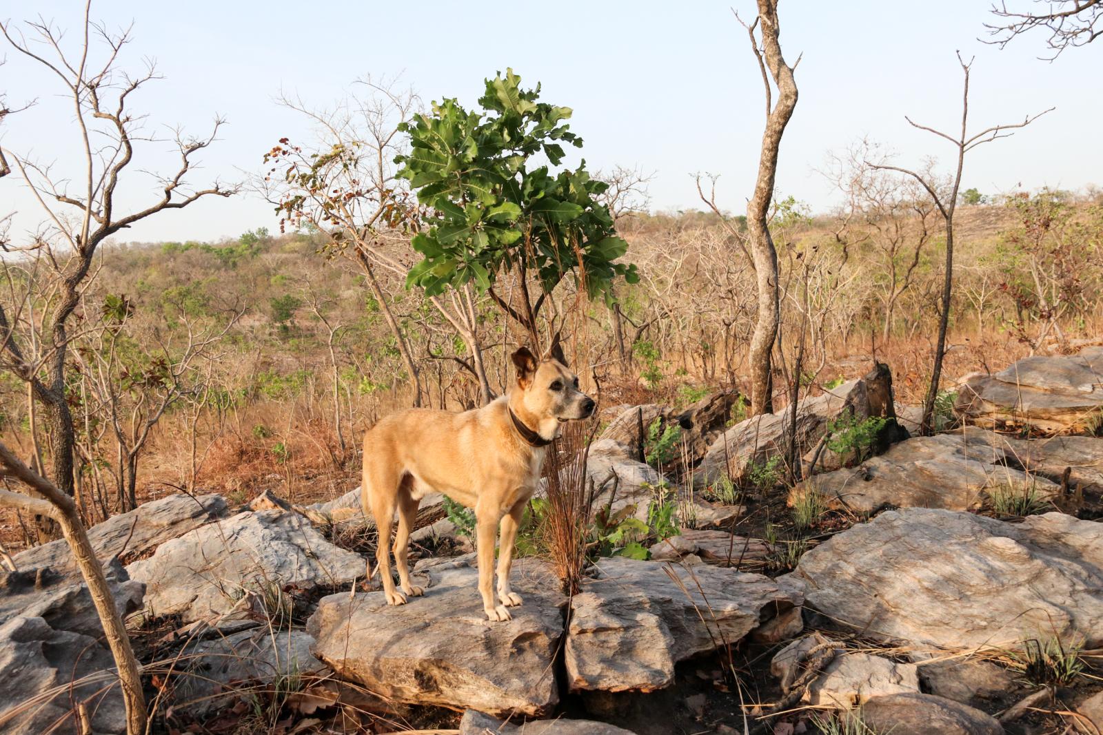 Unserem Hund gefällt es gut im trockenen Sahel-Klima.