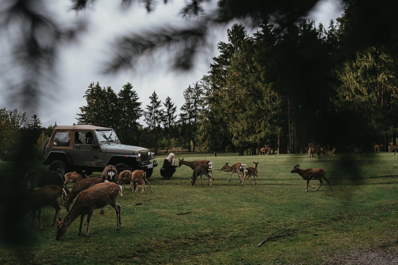 Mit dem Jeep Wrangler TJ im Wildpark im Einsatz.