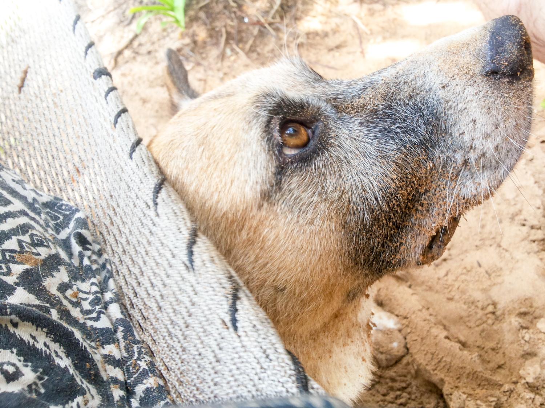 Kommt nicht in Frage: Ohne unseren Hund Sidi wollen wir nicht ausreisen.